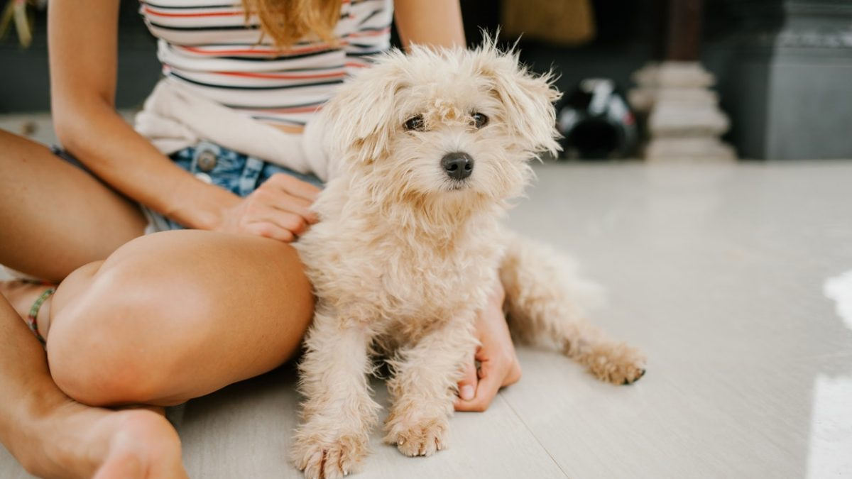 Dos & Don'ts When You Decide to Buy Dogs Online